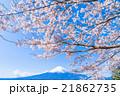 富士山と満開の桜 21862735