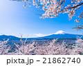富士山 桜 満開の写真 21862740