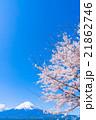 富士山と満開の桜 21862746