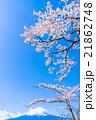 富士山と満開の桜 21862748