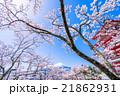 日本を象徴する風景【山梨県・新倉山浅間公園】 21862931