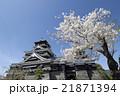 熊本城と桜 21871394