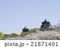 熊本城と桜 21871401
