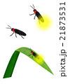 ホタル 21873531