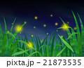 ホタル 21873535