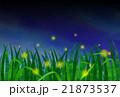 蛍 ゲンジボタル 蛍火のイラスト 21873537