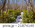 登山道 山道 春の写真 21874140