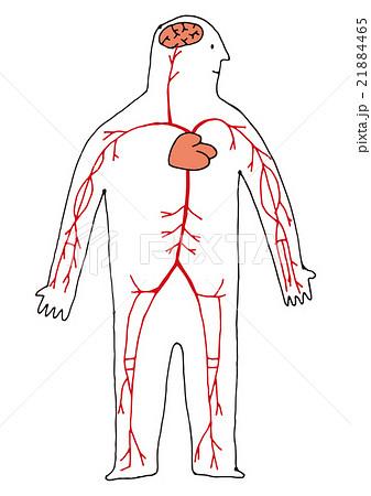 全身 心臓と血管 21884465