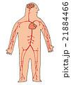 人体 全身 心臓のイラスト 21884466