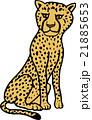 野生動物 チーター 背景なし 21885653