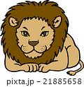 野生動物 ライオン 背景なし 21885658