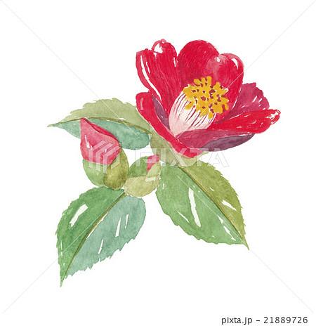 椿の花のイラスト素材 21889726 Pixta