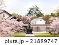 春 桜 名古屋城の写真 21889747