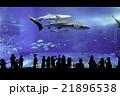 美ら海水族館 21896538