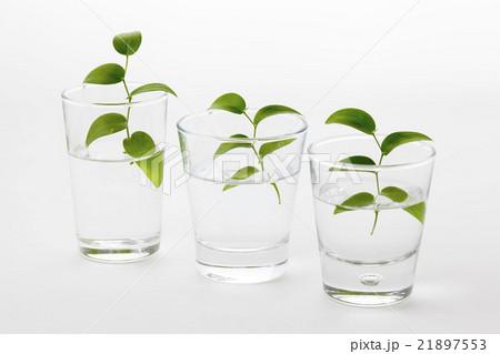 スマイラックスの入ったグラスややロングコップ3個斜め並び横位置の写真素材 [21897553] - PIXTA