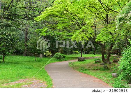 桜台公園 21906918
