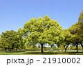 新緑の花博記念公園 21910002