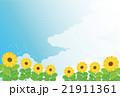 背景素材-夏イメージ,向日葵(ヨコ1) 21911361