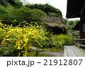 4月花 ヤマブキ28鎌倉・海蔵寺 21912807