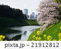 4月都市風景1175お花見・千鳥ヶ淵 21912812