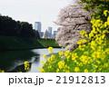 4月都市風景1176お花見・千鳥ヶ淵 21912813