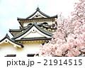 彦根城の桜 21914515