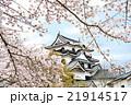 彦根城の桜 21914517