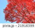紅葉 21916399