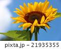 青空に咲く ひまわり 21935355