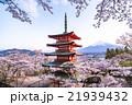 日本 風景 山梨県の写真 21939432