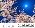 月光の夜桜 21939580