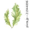 海藻 アオサ 21944896