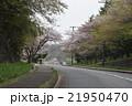 桜道を登る高校生の恋人 21950470