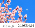 A flying airplane with Sakura in the foreground 21953484