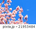 花 枝 分枝の写真 21953484