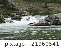京都のラフティング 21960541