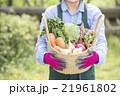 家庭菜園を楽しむ女性 21961802