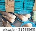 竹の子 21966955