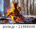 炎 たき火 焚き火の写真 21968446