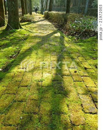 苔のある小道 21972003