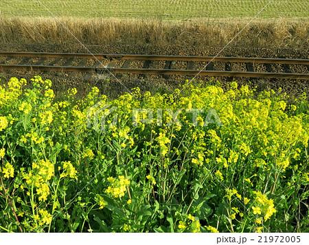 線路と菜の花 21972005
