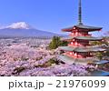 忠霊塔と満開の桜と富士山-778553 21976099