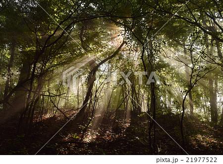 木漏れ日 森 光 光線 ナチュラル ネイチャー 自然 アウトドア 癒し 21977522