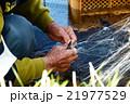 瀬張り網漁 伝統漁 男性 漁師 鮎 アユ 網 川 長良川 21977529