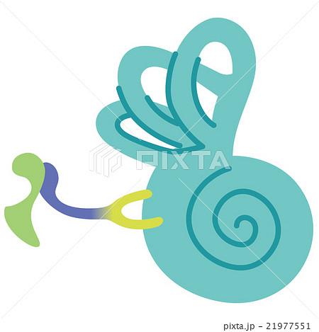 耳の構造 内耳 21977551