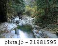 渓谷 面河渓谷 秋の写真 21981595