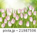 咲く 開花 フラワーのイラスト 21987506