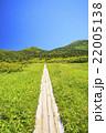 湿原 八甲田山 夏山の写真 22005138