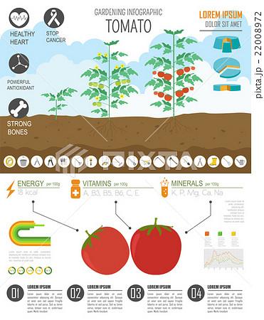 tomato graphic template fのイラスト素材 22008972 pixta