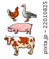 Set of farm animals on the white background 22010825
